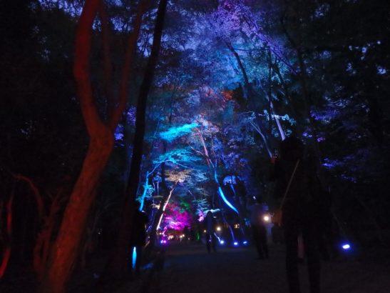 【日記】大原野神社のライトアップ見に行った